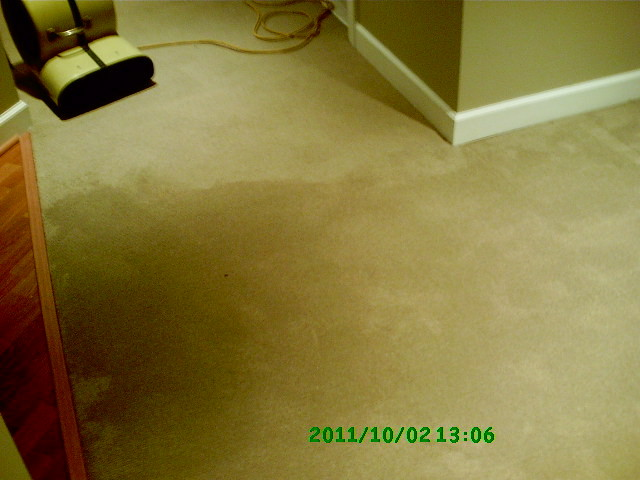 There is nothing worse than going down into the basement and seeing water everywhere. Your heart sinks as you begin to realise the magnitude of the problem. : water in basement carpet  - Aeropaca.Org